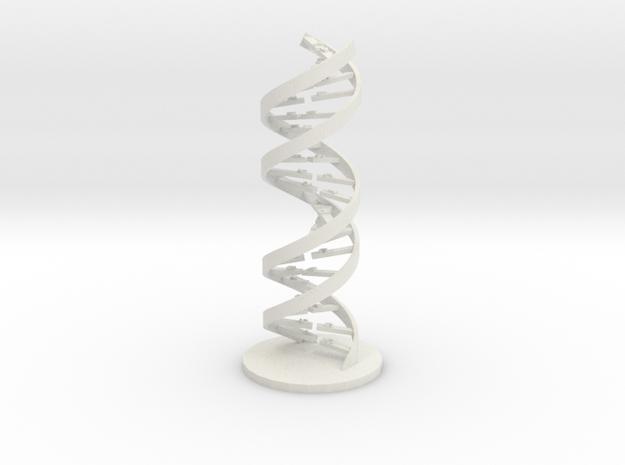 PCR Primer Pair