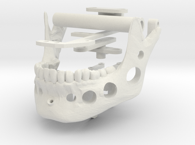 Skull JAW Only in White Natural Versatile Plastic