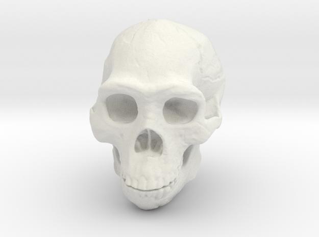 Real Skull : Homo erectus (Scale 1/2)