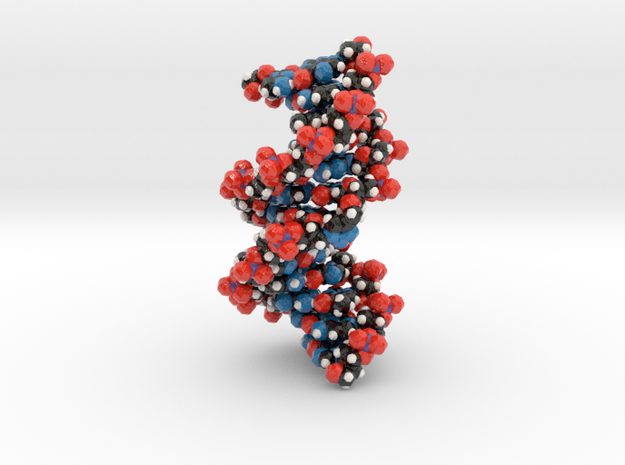 Triazole-linked DNA double helix 2.5x 3d printed