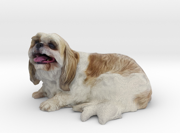 Shih Tzu 001 50mm in Full Color Sandstone
