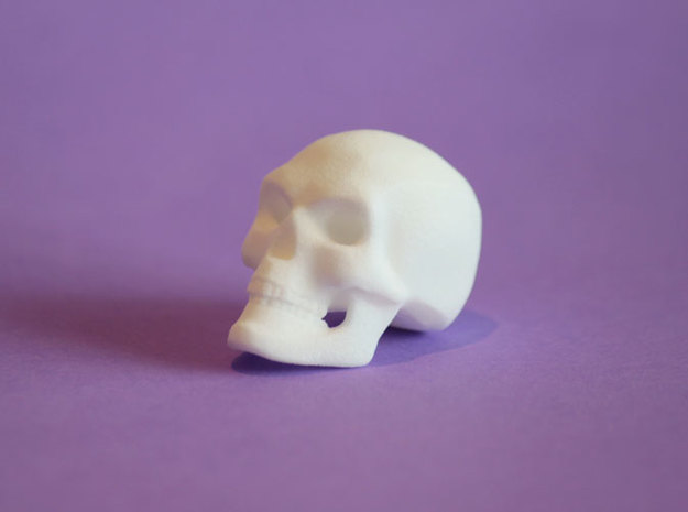 3D Printed Skull - Small in White Processed Versatile Plastic