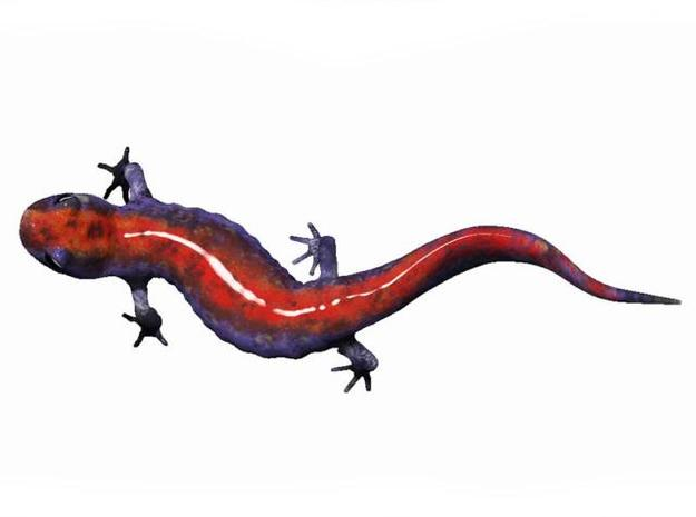 Salamander 10.7cm 3d printed Description