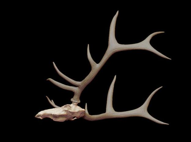 Elk Skull 3d printed Description