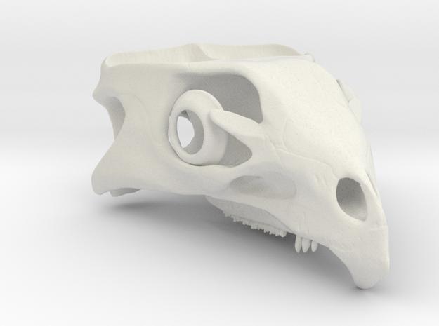 Aquilops americanus 1:1 - Cranium