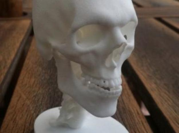 1/4 Scale Human Skull 3d printed Shown In White Strong & Flexible material
