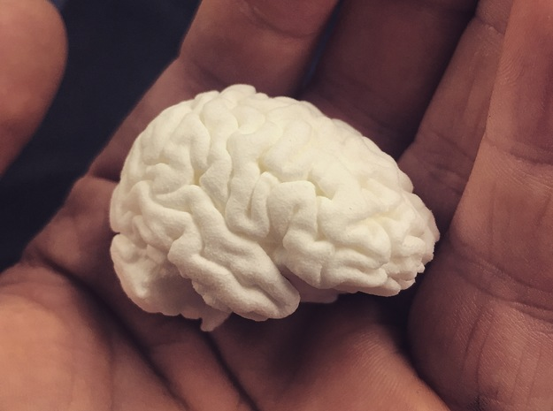 Real 3D Brain rendering  in White Strong & Flexible Polished