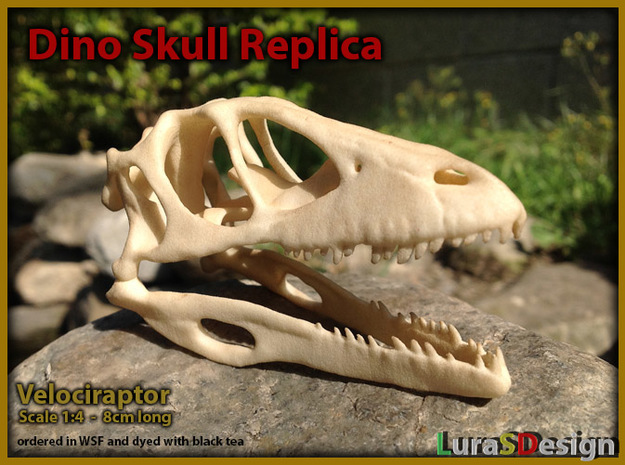 Dino Skull - Raptor Replica 3d printed dyed in a cup of black tea