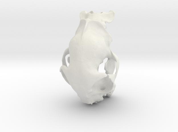 Alice's Cat Skull in White Natural Versatile Plastic