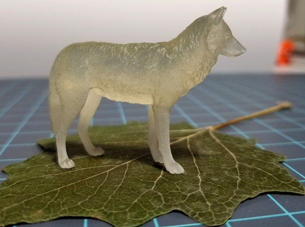 North American Gray Wolf - Small in Smooth Fine Detail Plastic