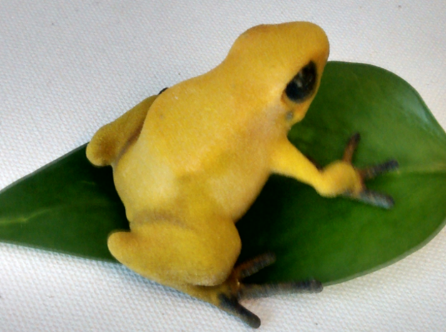 Golden Dendrobates terriblis 3d printed