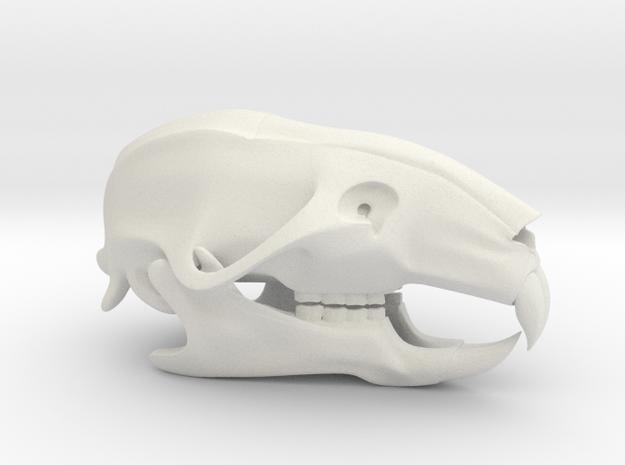 Mouse Rat Skull 3D Printed Model in White Natural Versatile Plastic