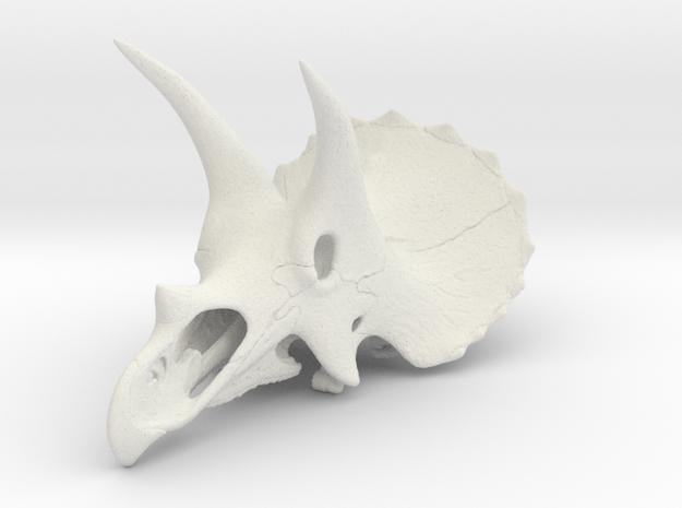 Triceratops - dinosaur skull replica