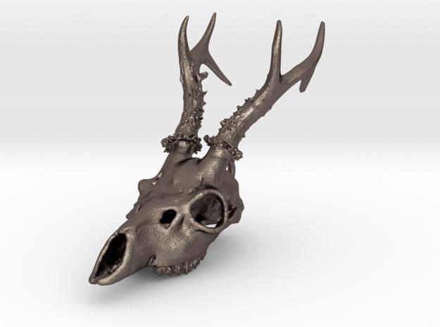 Capreolus skull with teeth