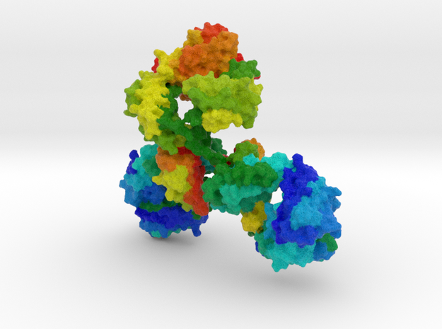 Immunoglobulin Antibody (Medium)  in Natural Full Color Sandstone