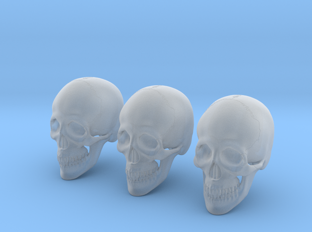 1:16 Scale Human Skull - Bundle in Smoothest Fine Detail Plastic