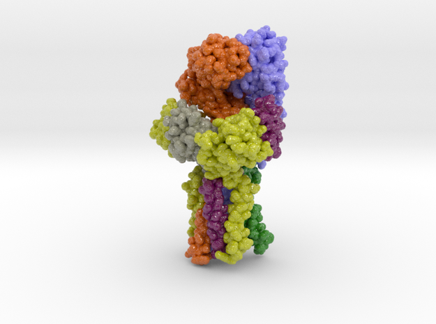 T Cell Receptor CD3 Hexamer Complex 6JXR in Glossy Full Color Sandstone: Small