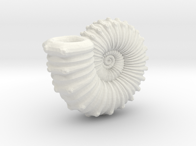 Ammonite in White Strong & Flexible