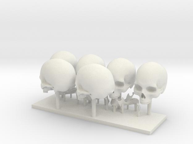skull 1:8 26 mm in White Natural Versatile Plastic