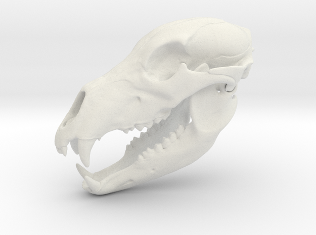 Bear Skull. Jointed Jaw. 10cm