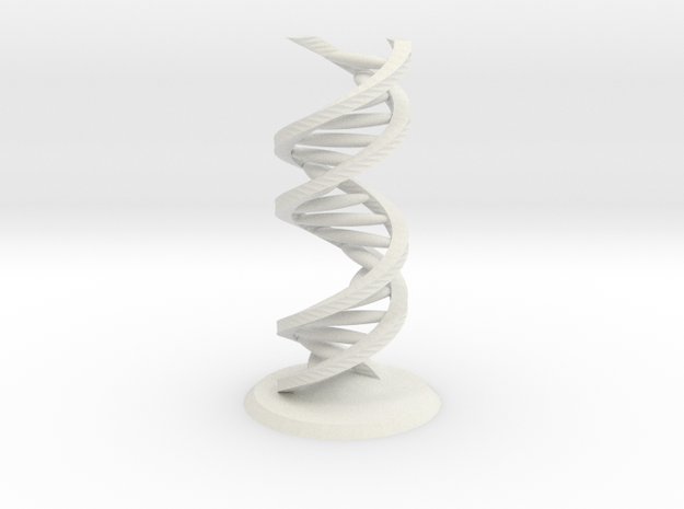 Accurate DNA Model in White Natural Versatile Plastic