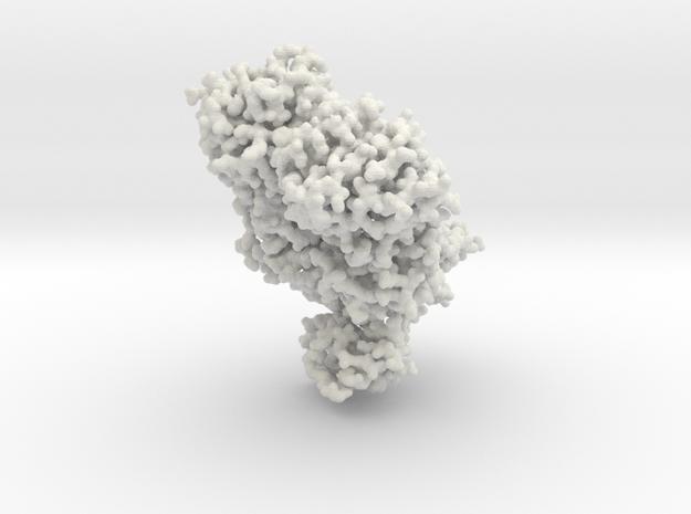 Lac Repressor Bound to DNA - All atom 3d printed