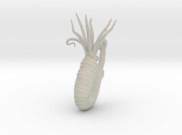 Heteroceras 3d printed