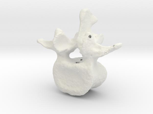 L3 lumbar vertebral body in White Strong & Flexible