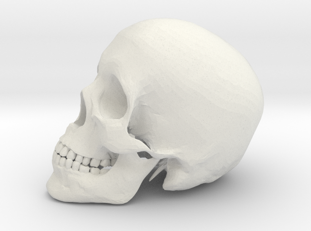 Detailed Human Skull (Life sized) in White Natural Versatile Plastic