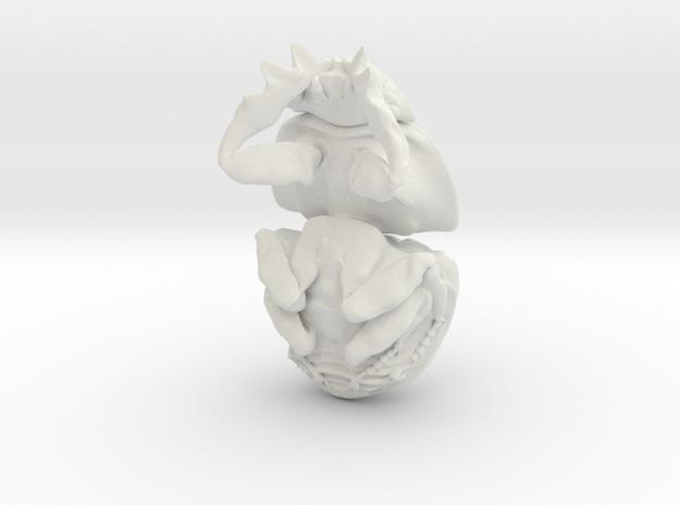 Dung Beetle Pendant 2.9cm - style 1 - Circellium b in White Natural Versatile Plastic
