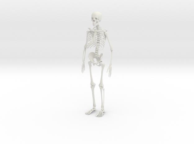 Skeleton in White Natural Versatile Plastic