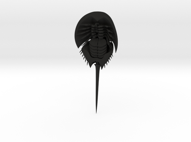 Articulated Horseshoe Crab (Limulus polyphemus)