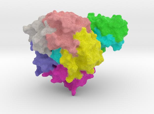 E-coli Toxin
