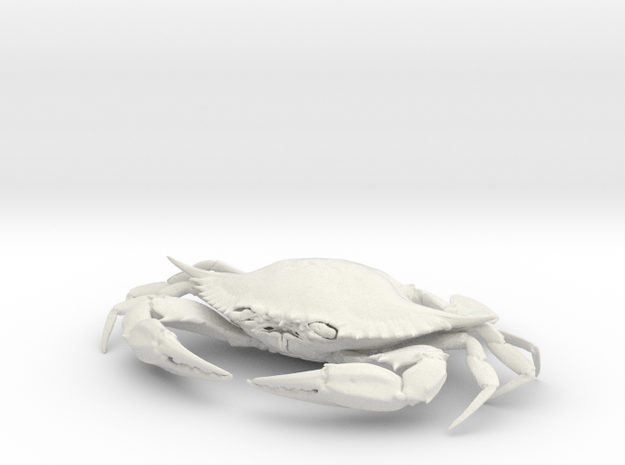 Female Blue Crab in White Natural Versatile Plastic