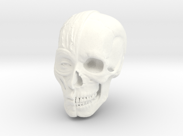 Anatomy Head in White Strong & Flexible Polished
