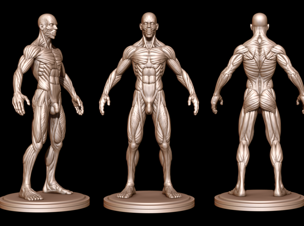 Idealized Male Ecorche Detailed - V2 in White Strong & Flexible Polished