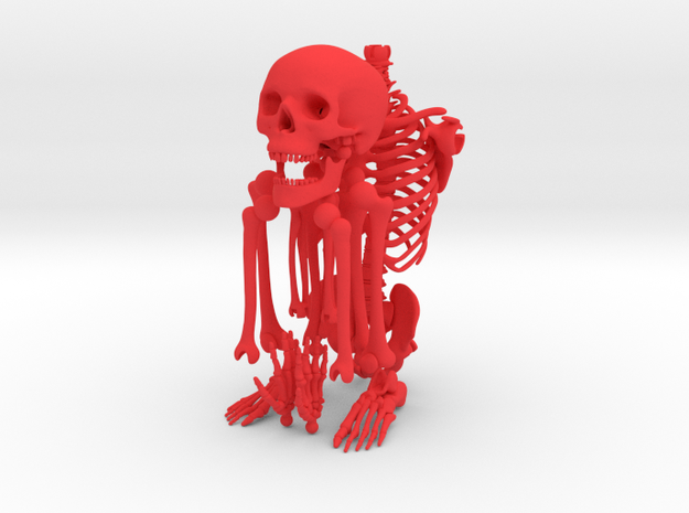 Mr Bones -- Articulated Skeleton
