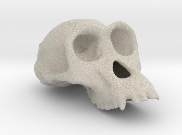 Chimpanzee ♀ cranium in Natural Sandstone
