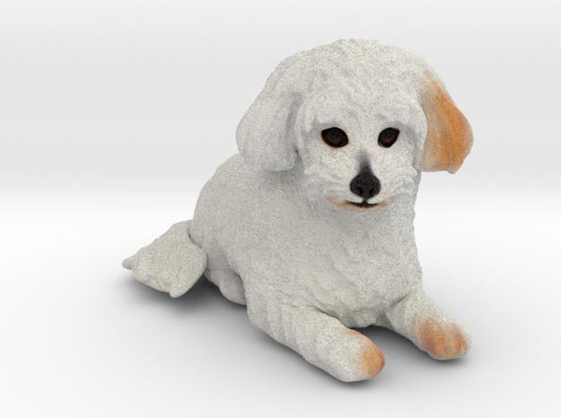 Custom Dog Figurine - Andy in Full Color Sandstone