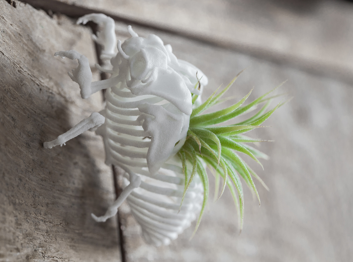 Cicada Nymph Skeleton 3d printed
