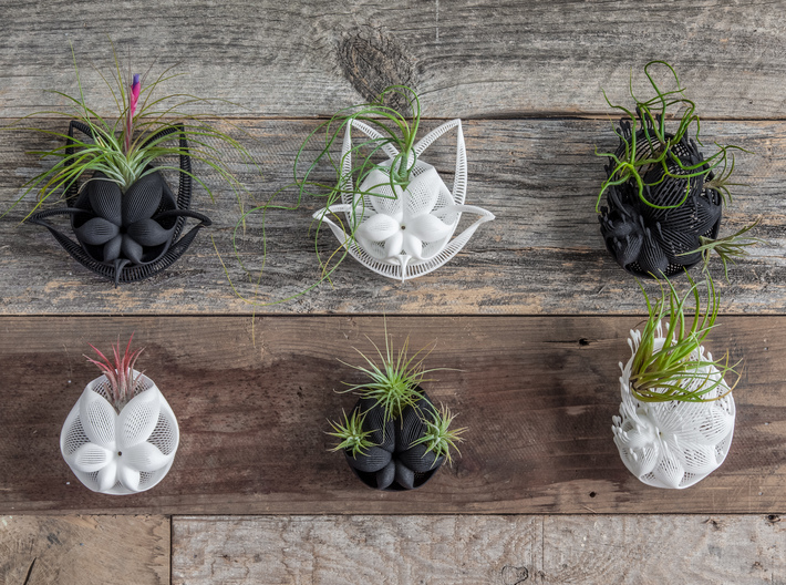 Bulbophyllum Simplex Planter 3d printed More wall-hanging designs in this series
