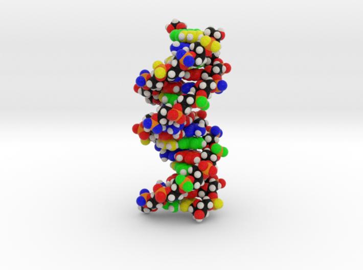 "DNA Molecule Model ""Emily"", Standard 3d printed"