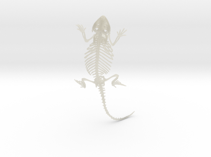 Bearded Dragon Skeleton - 4 Inches 3d printed