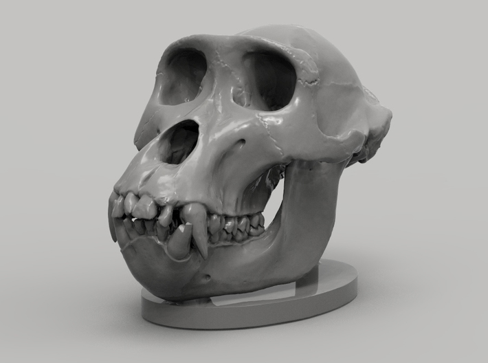 Gorilla Skull with base 3d printed