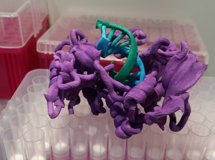 Phi29 Polymerase 3d printed White Strong & Flexible Plastic, hand painted with watercolor paints. The colors I chose to paint this model: Protein: Purple --- Old DNA strand: Green --- Newly synthesized DNA and incoming NTP: Blue --- Magnesium ions: Orange