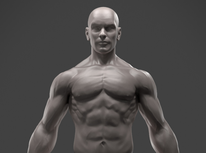 male anatomy sculpture (mvy8m7u2c) by sculptorhec, Human Body