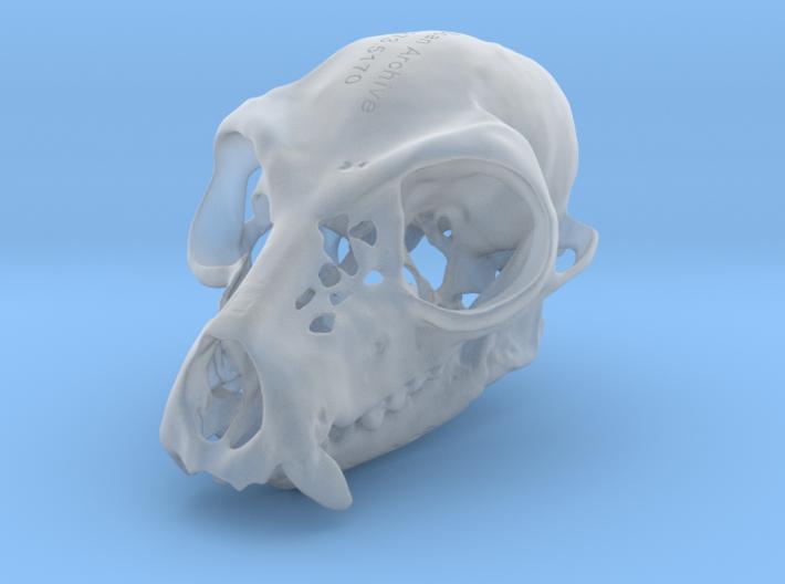 Lemur Skull 3d printed