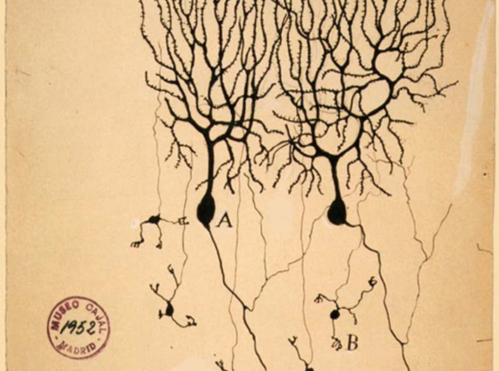 Purkinje Neuron Bracelet 3d printed Drawing of Purkinje cells from pigeon cerebellum by Santiago Ramón y Cajal, 1899. Instituto Santiago Ramón y Cajal.