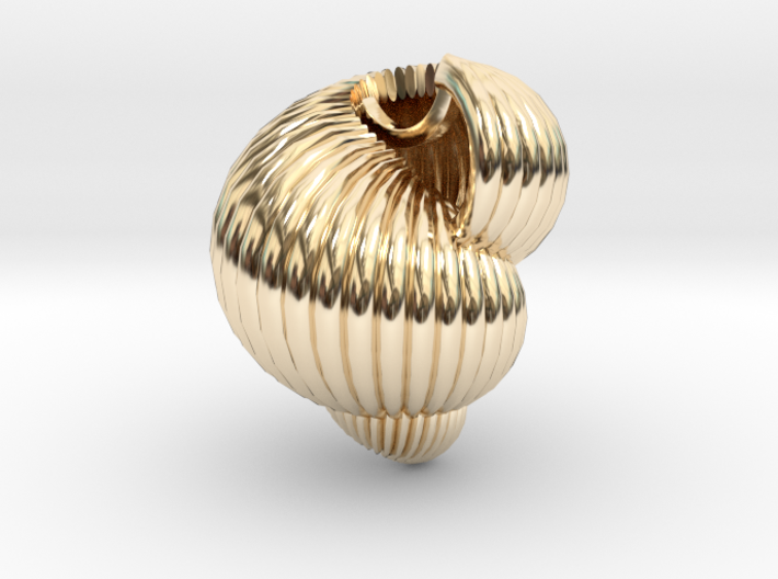 Shell n°3 3d printed