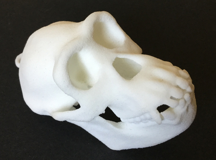 Chimpanzee skull 52mm 3d printed